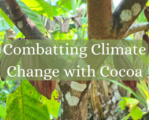 Combatting Climate Change with Cocoa